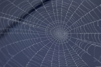 don't get caught in the marketing strategy spider web of the norm