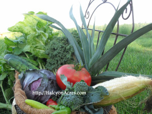 Halcyon Acres vegetable basket